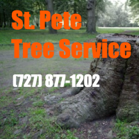 st pete fl tree service copy